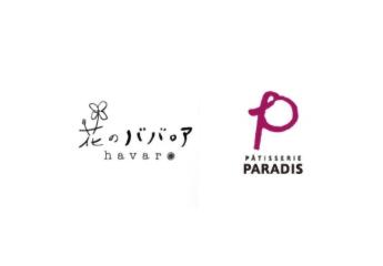 花のババロア havaro/PARADIS(パラディ)